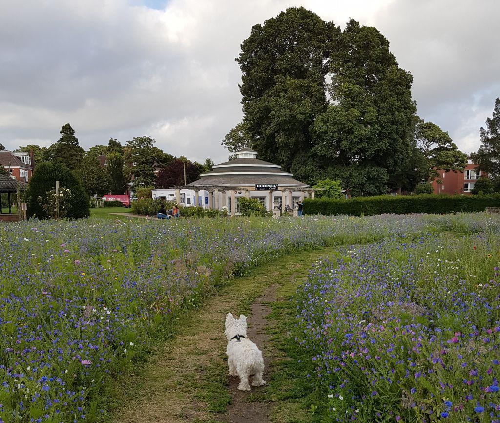 westie preston park wild flowers